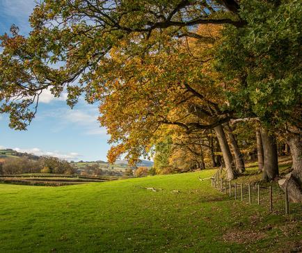 Woodland on the edge of Rockbridge Park footpath