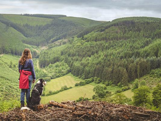 dog friendly holiday park in Wales